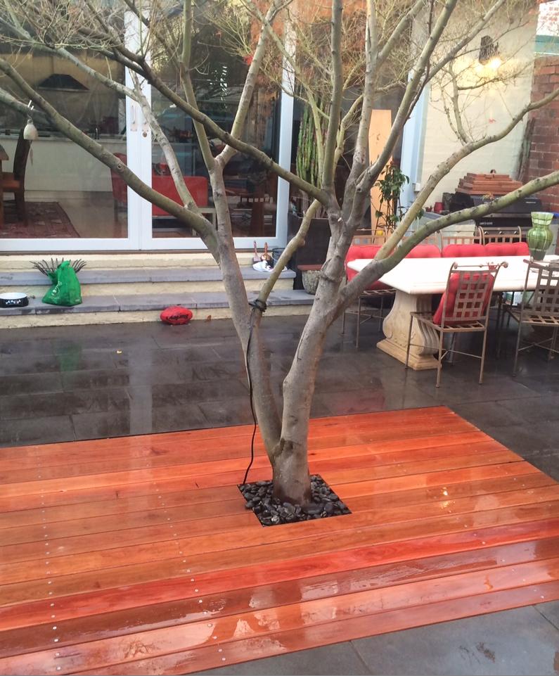Ironbark decking boardwalk around tree