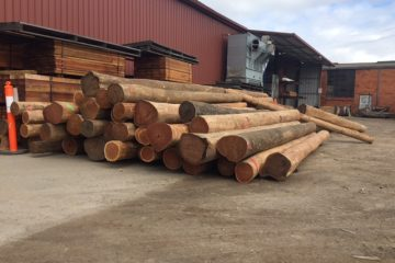 Ironbark logs Large